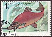 USSR - CIRCA 1983: A stamp printed in the USSR shows  salmon. circa 1983