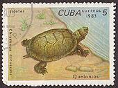 CUBA - CIRCA 1983: A post stamp printed in Cuba shows  turtle  . Circa 1983
