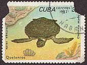 CUBA - CIRCA 1983: A post stamp printed in Cuba shows Marine turtle. Circa 1983