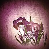 Vintage floral background with crocus