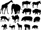 large herbivores