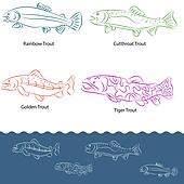 Types of Trout