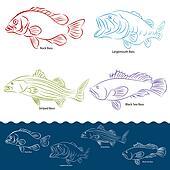 Bass Fish Types
