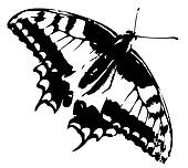 Butterfly vector trace