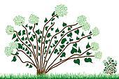 Lonely isolated Hydrangea bushes