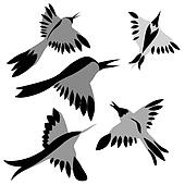 decorative birds drawing