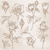 Flower Set: Detailed Hand Drawn Roses in vector