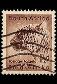 South Africa Postage StampLeopard 1954