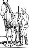 Horse rider measuring horse size vintage engraving