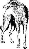 Sighthound, dog