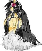 vector sketch dog Shih Tzu breed