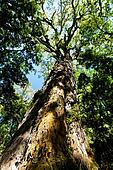 Big tree in a tropical forest