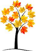Maple tree, autumn leaf,
