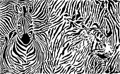 Zebra and tiger and pattern backgro