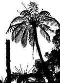 Fern tree silhouette, tropical bushes