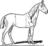Parts of a Riding Horse, vintage engraving