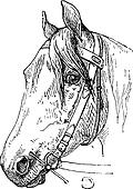 Horse Headcollar and Bit Mouthpiece, vintage engraving