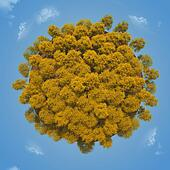 Yellow small planet