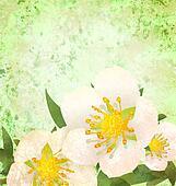 wild roses white flowers