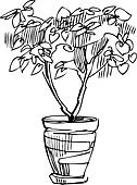 sketch room plant flower in a pot