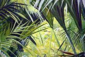 Jungle  of Seychelles