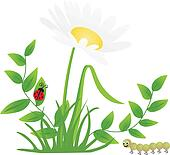 Flower Ladybug Centipede