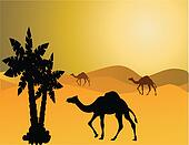 camel in the savanna