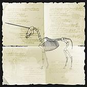 Ancient skeleton of unicorn