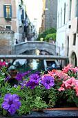 Venice flower Italy