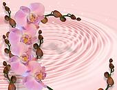 Pink orchids on satin swirl
