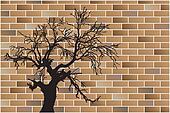 dead tree on wall