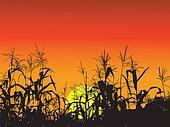 the corn leaf background