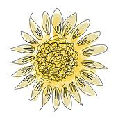 Sketch of sunflower for your design