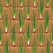 onion sprout vegetable patches in row seamless