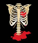 Vector. Red heart inside of skeleton