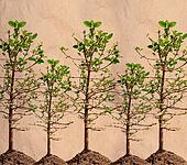 mangrove tree on paper texture