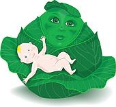cartoon baby in the cabbage