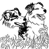 Two Border Collie Dogs in Flower Field