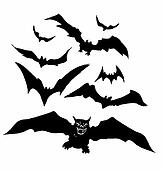 bats illustration