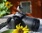 Bird;The titmouse  sitting on the camera