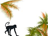 Monkey and palm