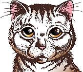 surprised cat face