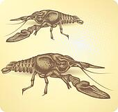 Crayfish, hand-drawing. Vector illu