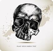 Skull hand drawing. Vector illustra