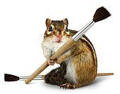 Funny chipmunk hold paint brush