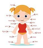 girl body parts