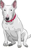 vector cartoon Bull Terrier Dog breed sittong
