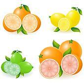 set of citrus orange lemon lime grapefruit illustration
