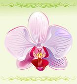 Orchid on spring background