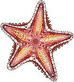 Abstract Starfish